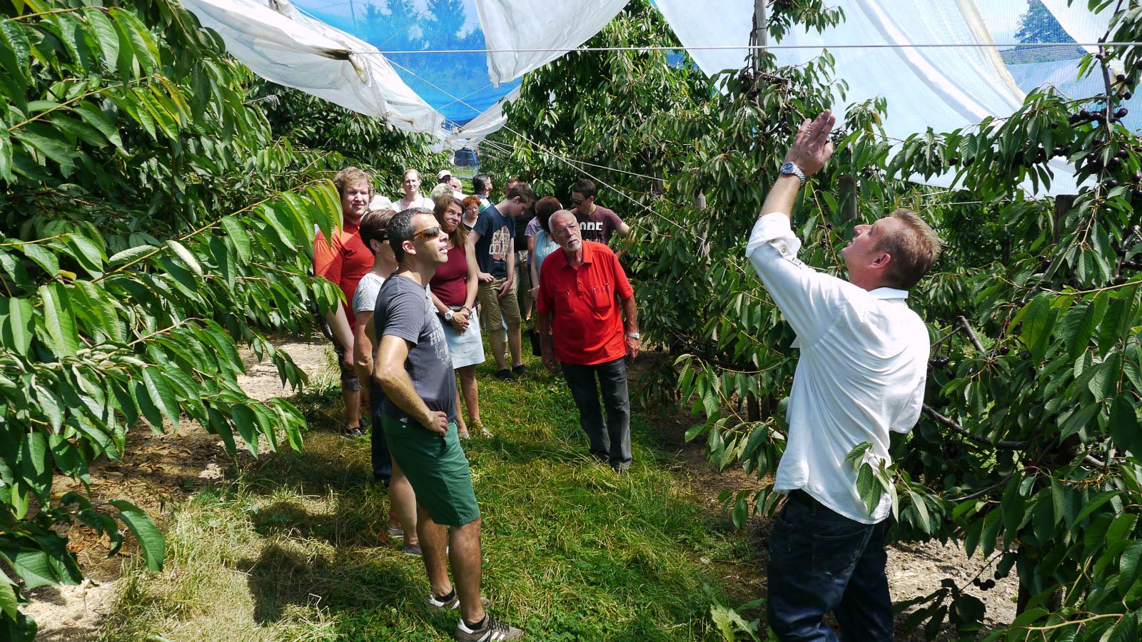 Daniel Wegmann erzählt den Besuchern Spannendes über den Obstanbau.