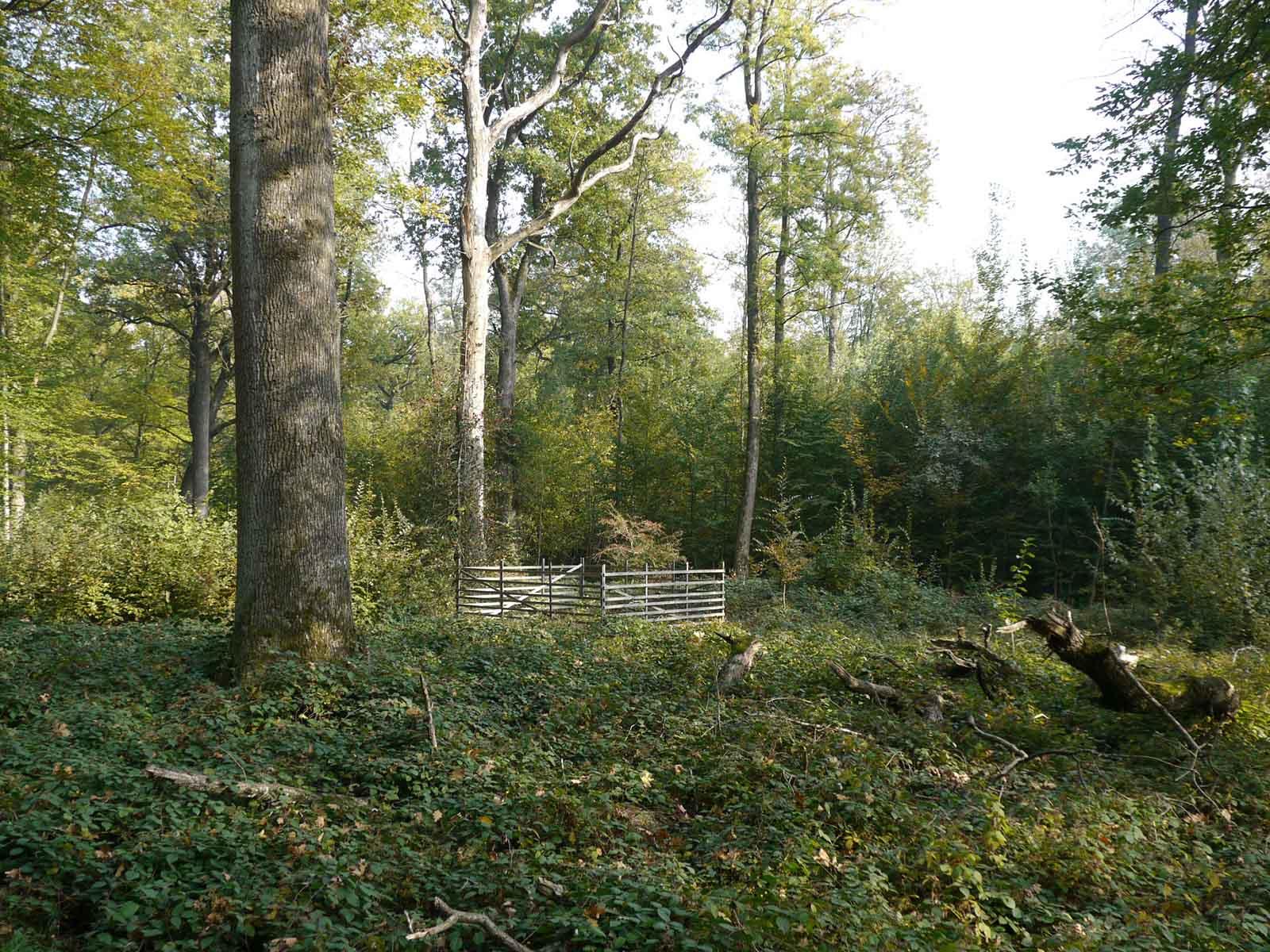Rechts der Kappeliholzstrasse: Mittelwald heute, wie er auch seit dem 13. Jahrhundert bewirtschaftet wurde. Das «Oberholz», die grossen Bäume, lieferten das Bauholz, das Unterholz, die «Hauschicht» wurde 20 Jahre als «Stockschlag» zu Brennholz verarbeitet.