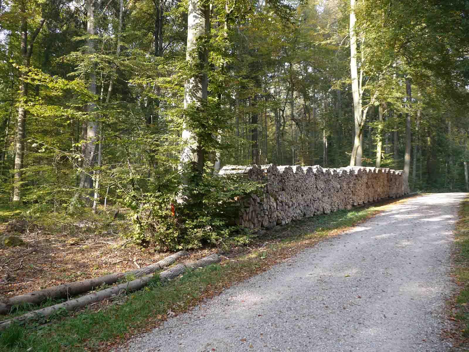 Brennholz eines privaten Waldeigentümers, gelagert an der Hungerbergstrasse.
