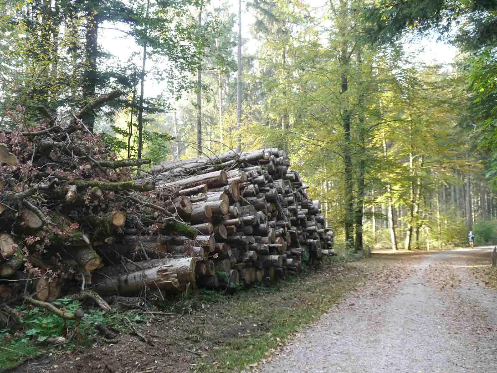 An der Grünwaldstrasse: Wer roden will, braucht eine Bewilligung und muss die gefällten Bäume wieder aufforsten.