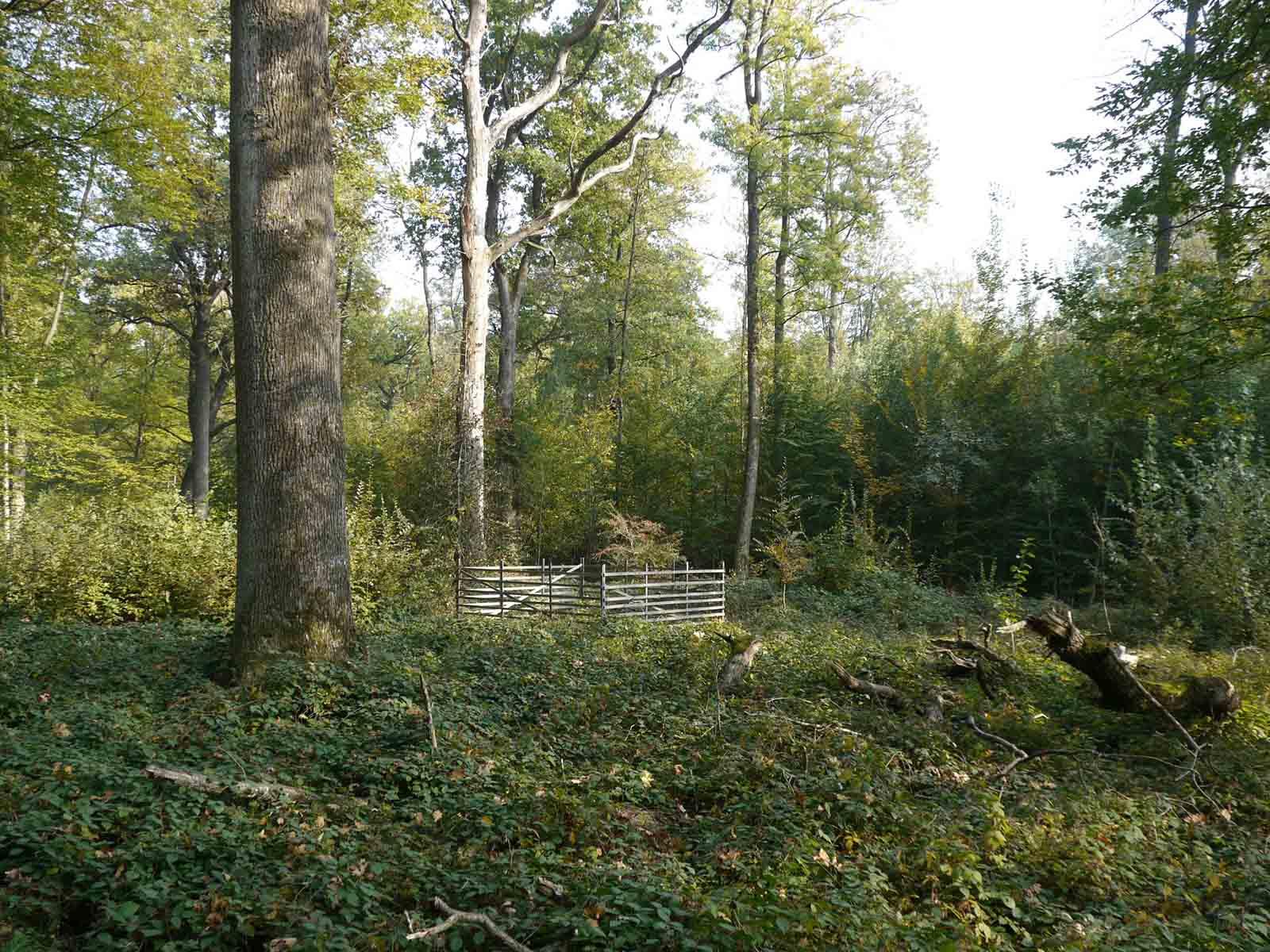 Der Mittelwald wurde angelegt, um zu zeigen, wie die ursprüngliche Waldform früherer Jahrhunderte aussah.