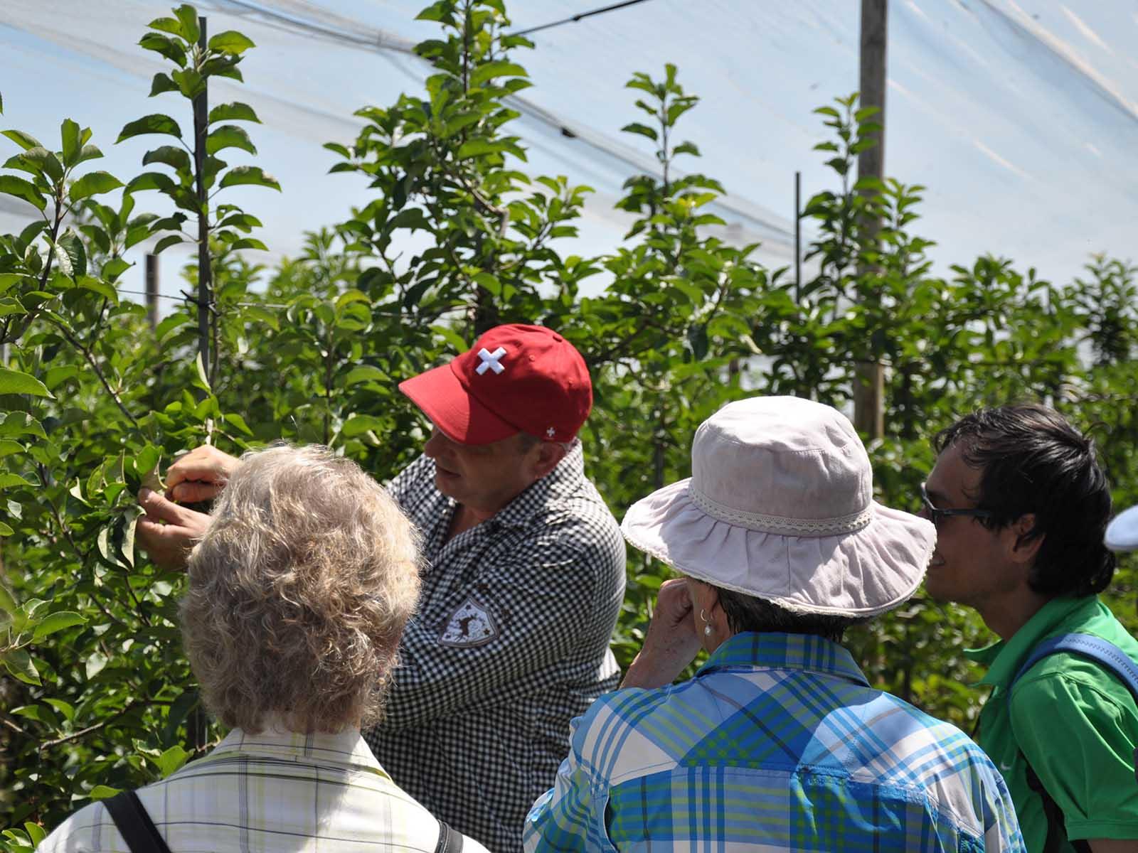 Obst- und Weinbauer Daniel Wegmann zeigt den Besucher*innen, wie der Maikäfer als Nützling gegen Läuse auf den Apfelbäumen eingesetzt werden kann.