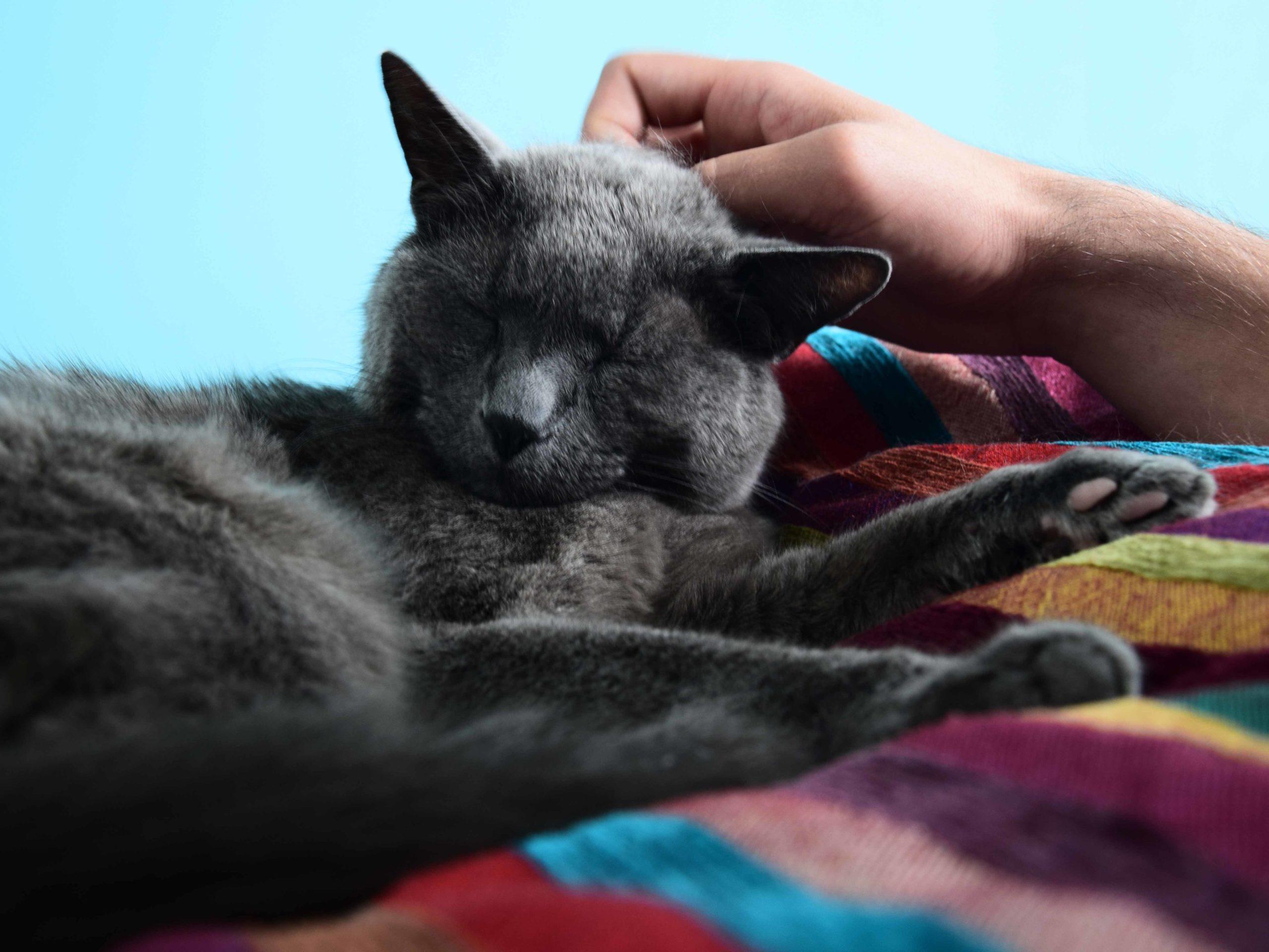 Die Nähe zu einem Tier hilft gegen Einsamkeit. Auch das Fell der Tiere spielt dabei eine wichtige Rolle.
