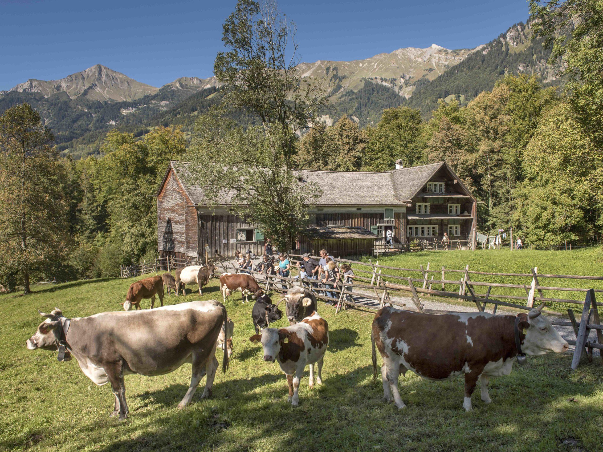 Freilichtmuseum Ballenberg: Appenzellerland im Berner Oberland