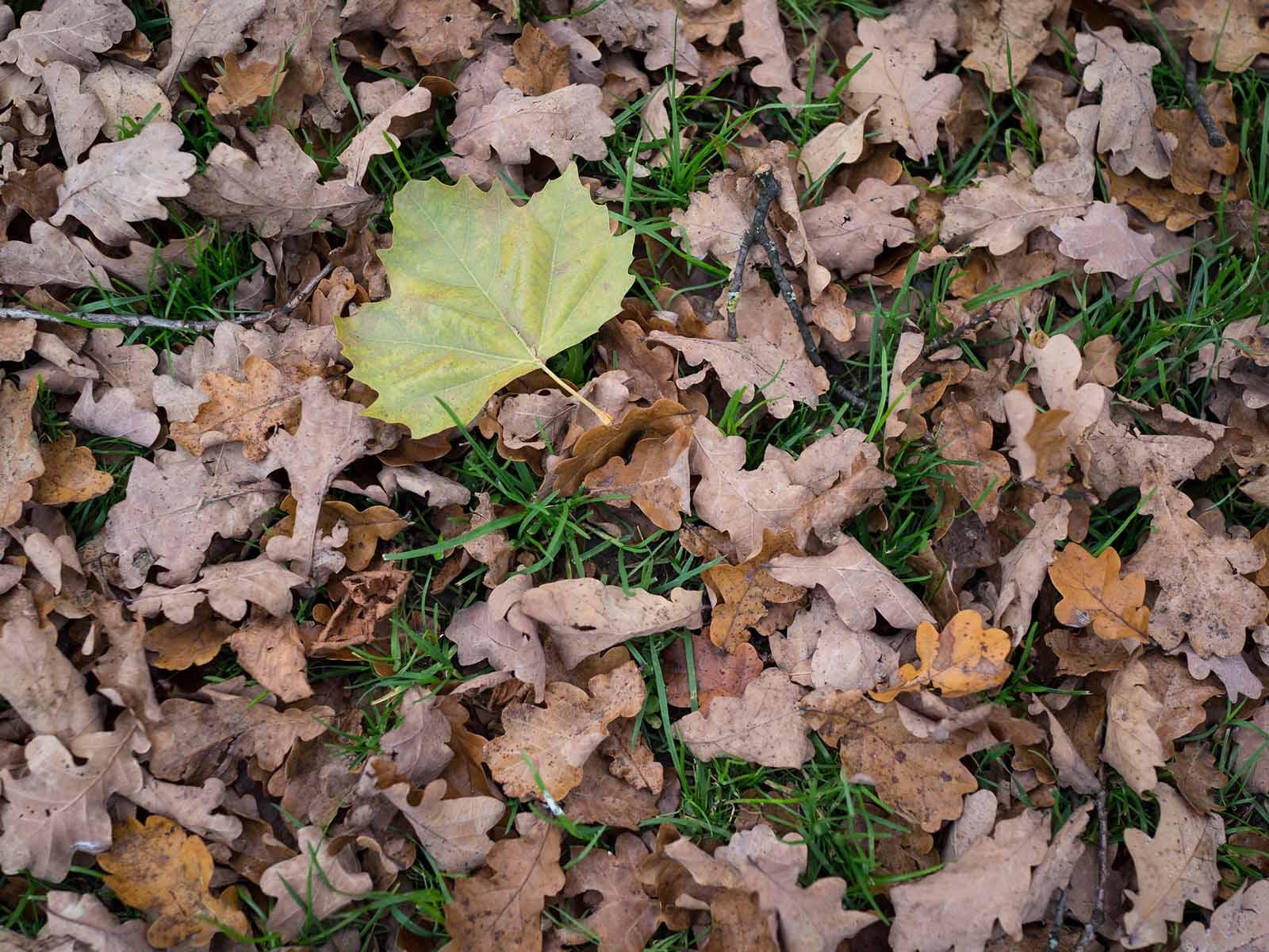 Auf dem Naturspaziergang dreht sich diesmal alles ums Herbstlaub.