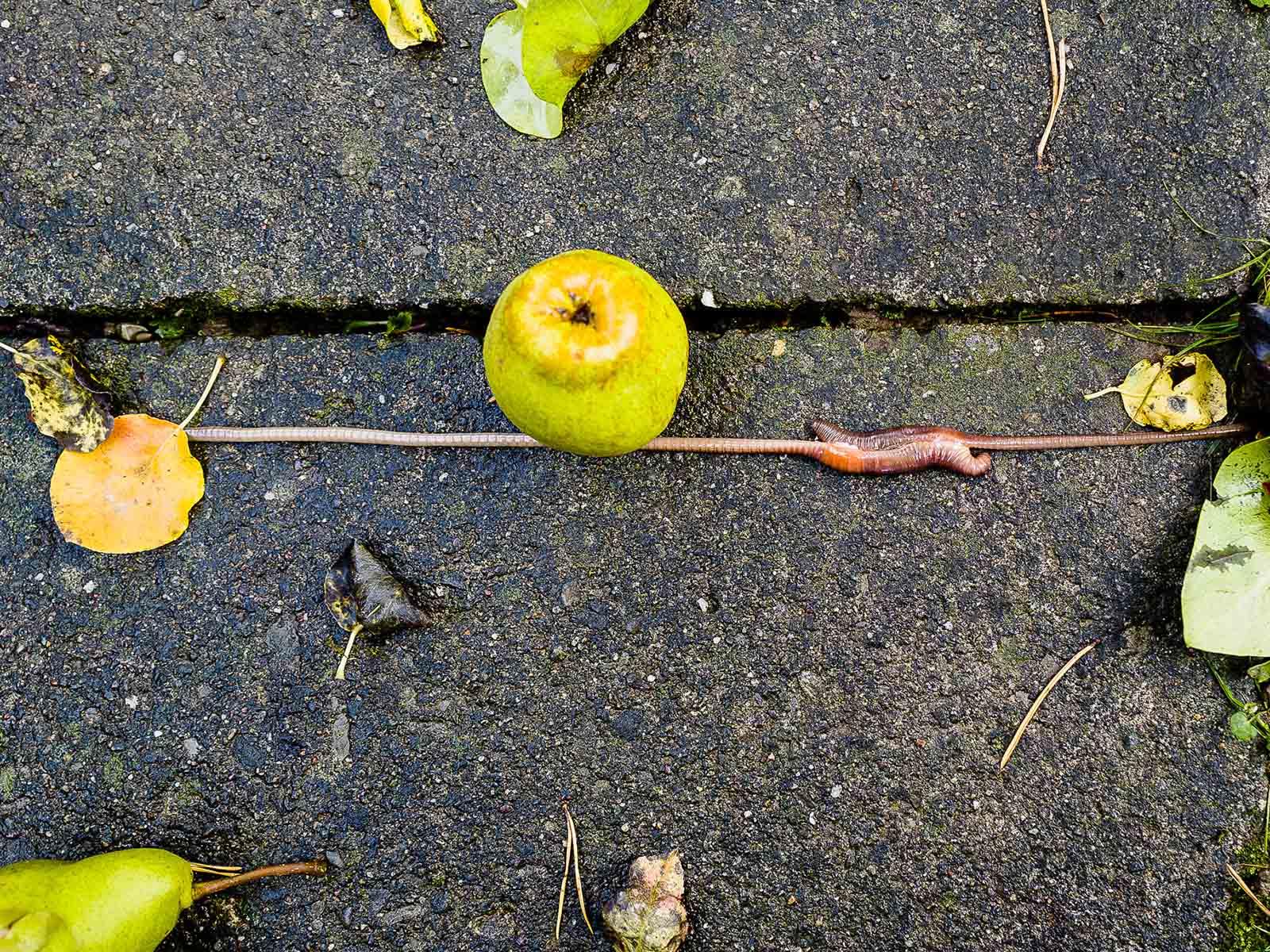 Gefressen oder zertreten werden – die stundenlange Wurmliebe ist gefährlich.