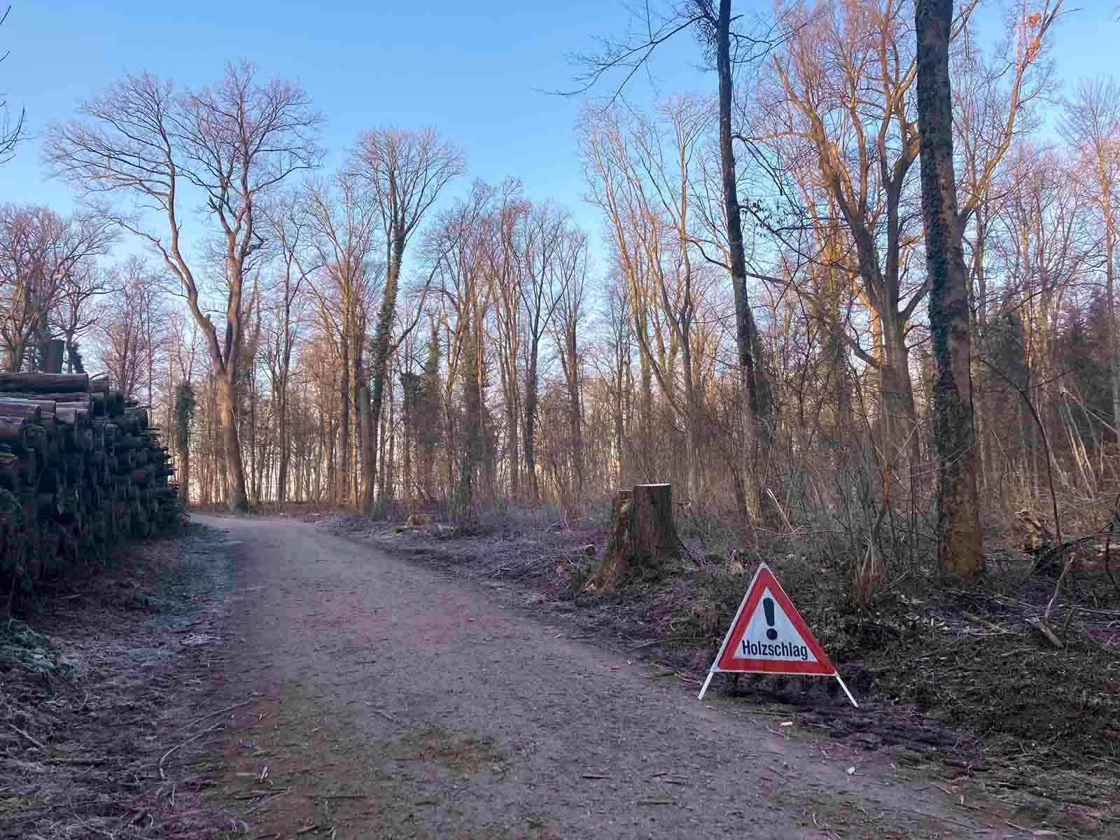 An verschiedenen Orten auf dem Hönggerberg, hier beim Mittelwald, wurde geholzt.