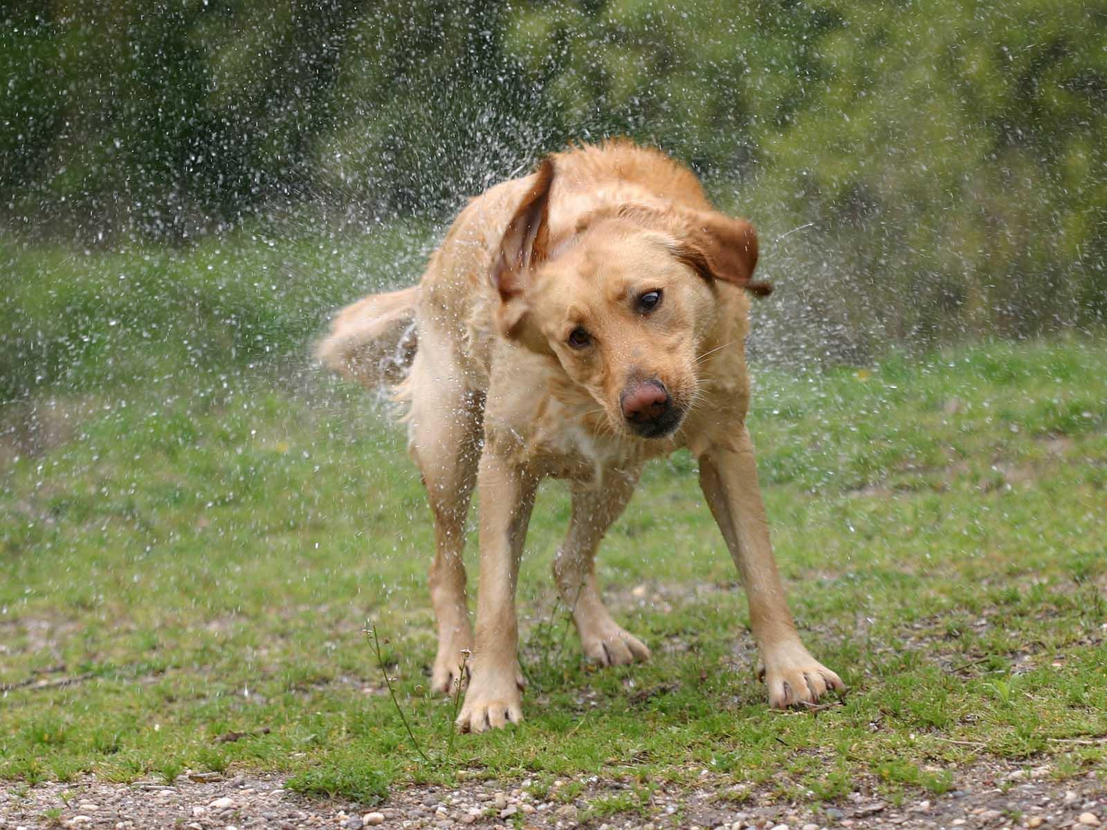 Hundstage mal anders: Dieser Sommer garantiert viel Spass mit nassen Vierbeinern und Kindern.